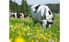Eurovix - Bioenhancers for Livestock Care