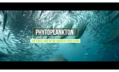 Discover what microalgae are in just 60` - Video