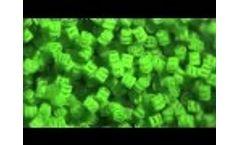 Clewer01 Video