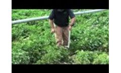 AMS, Inc. Regular Soil Step Probe - Video